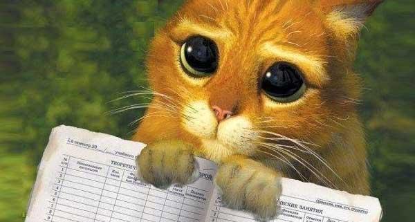 котка умилителен поглед