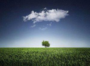 самотно-дърво
