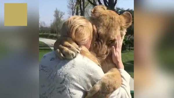 лъвове-прегръщат-жена