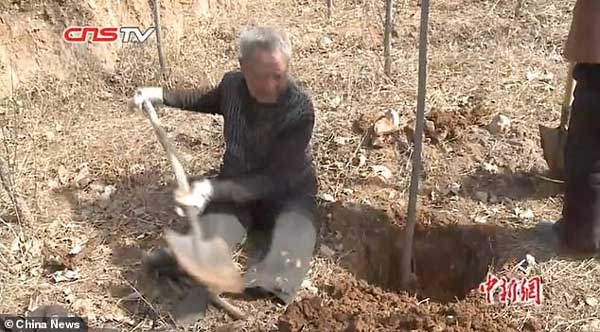 мъж-без-крака-сади-дървета