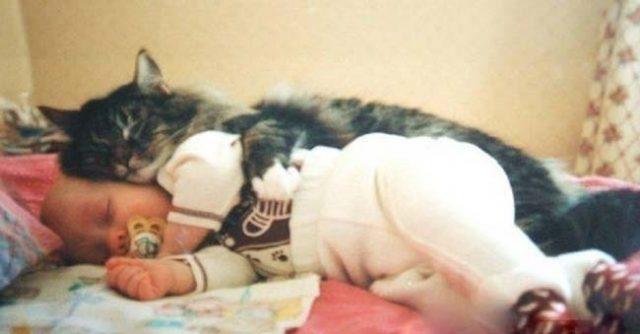 Котка-спасила-бебе,-захвърлено-в-мазе-в-кутия