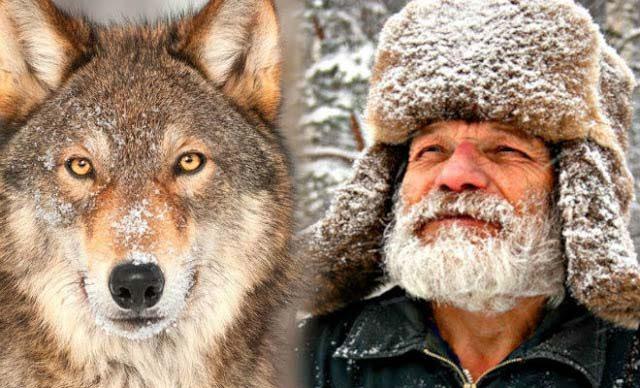 Мъж хранел гладен вълк цяла зима. След 4 години вълкът направил нещо невероятно...