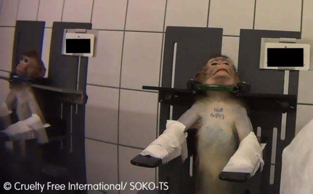 Изтекло видео показва животни, които са измъчвани във фармацевтична лаборатория