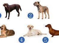 """Тест-предсказание: избраното куче ще ви """"прошепне"""" каква изненада ви чака до края на 2020"""