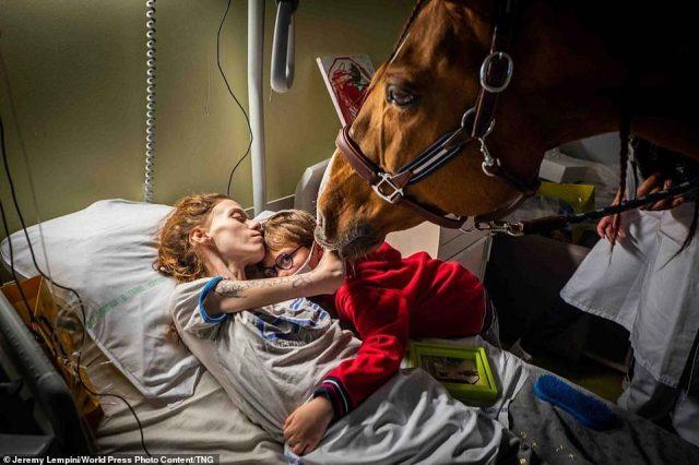 Сърцераздирателна снимка показва кон, утешаващ умираща от рак и нейният син